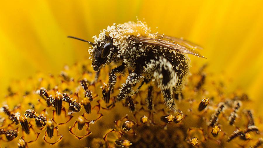 Свойства пыльцы растений