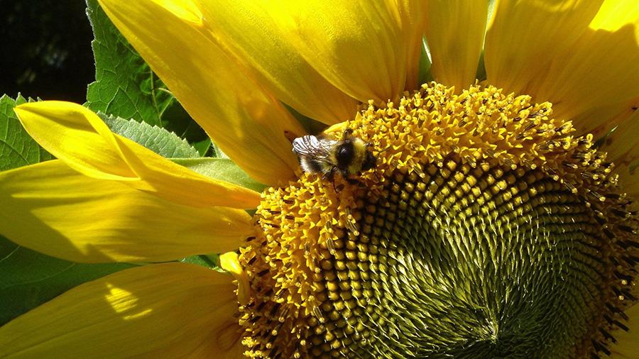 Химический состав пыльцы растений