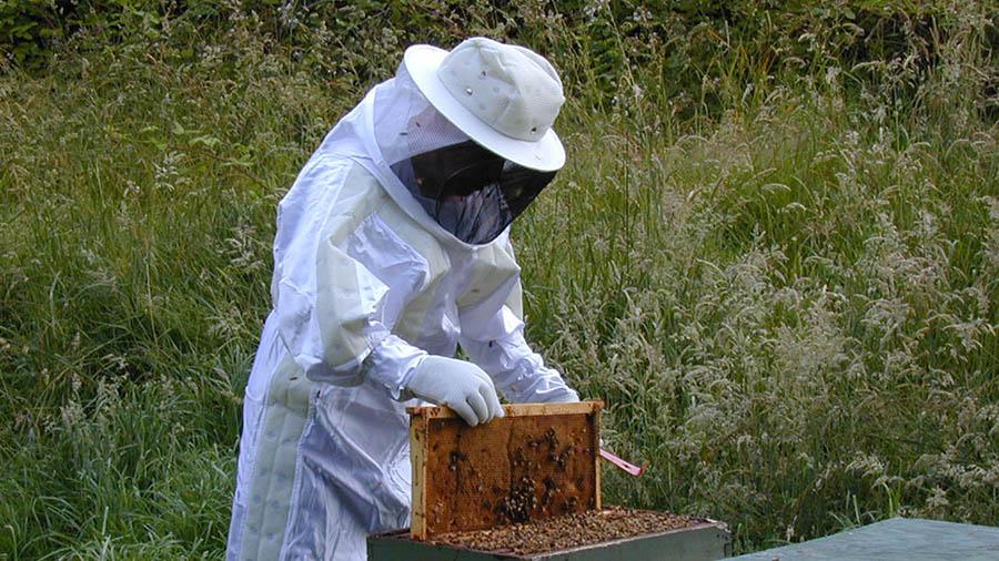 В США сокращается популяция пчел