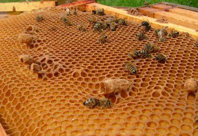 Что такое пчелиный воск